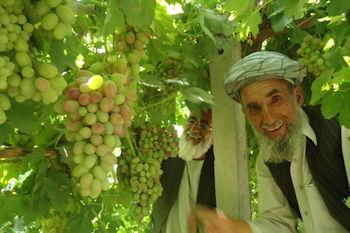 Afghanistan agriculture - Dari Translation Services